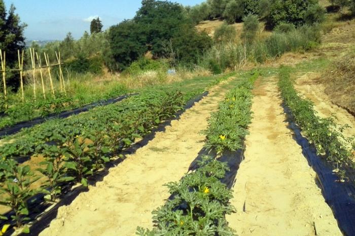 Agriturismo il giardino dei semplici in palaia partino - Il giardino dei semplici ...
