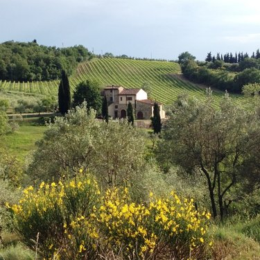 Accommodation Farmhouse in the Chianti countryside