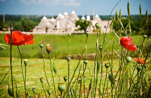Trulli countryhouse with pool: food, wine and relax - Martina Franca