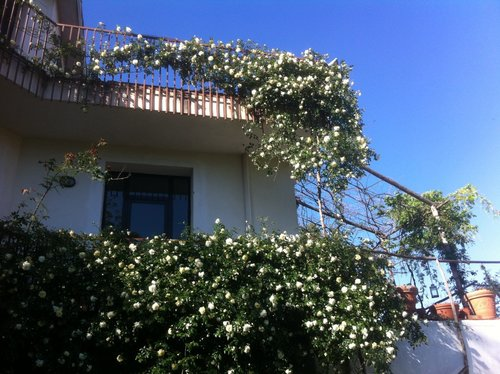 Farmhouse surrounded by a beautiful nursery of old roses - Domicella