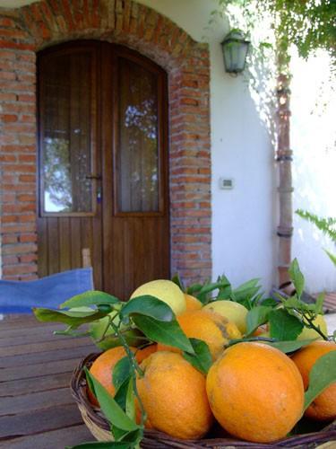 Prezzi e alloggi agriturismo tra agrumeti e alberi da for Alberi da frutto prezzi