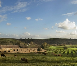 Unforgettable farm with a restaurant and SPA - Caltagirone