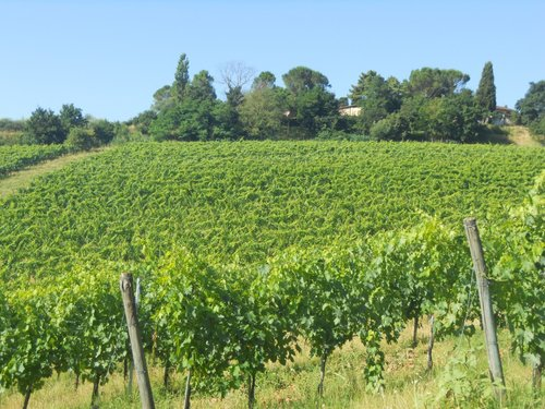 Farmhouse in the cellar: wine-growing company - Chiusi
