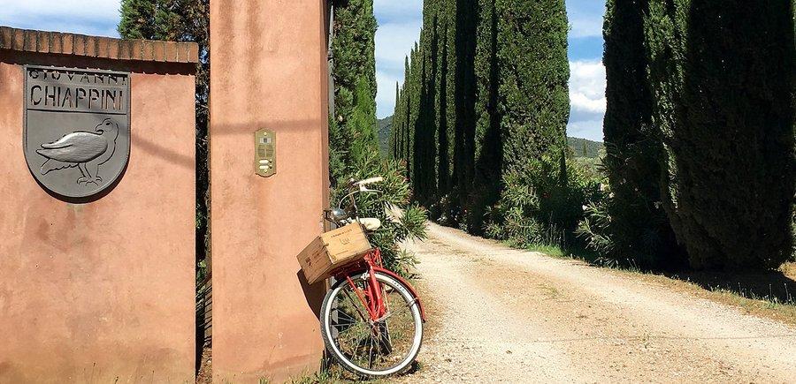 Matrimonio Tra Gli Ulivi Toscana : Agriturismo tra gli ulivi a castagneto carducci bolgheri