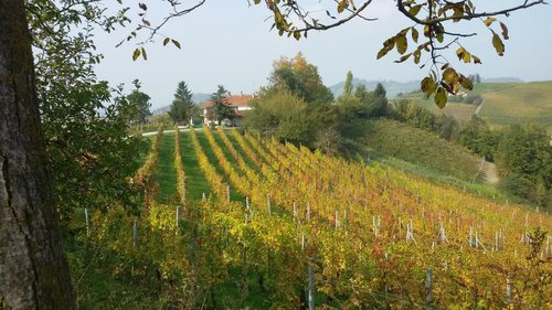 Surrounded by vineyards in the Dolcetto of Dogliani - Dogliani
