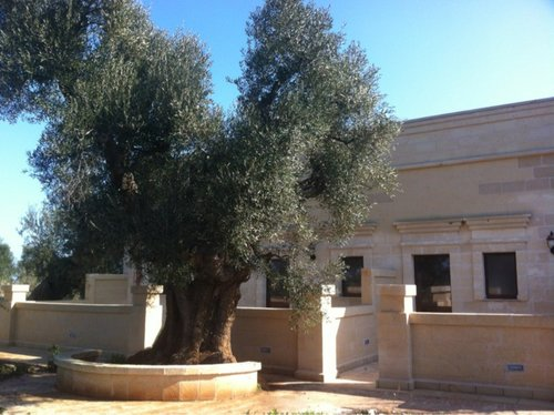Agritursimo in the middle of olive trees and quiteness - Fasano