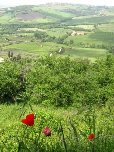 Agriturismo Barbi A Pienza -  Siena