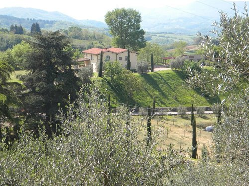 Farmhouse between olive trees and cypresses in the Florentine countryside - Vicchio