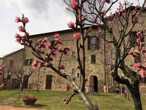 The mulberries of Santa Cristina - Gubbio
