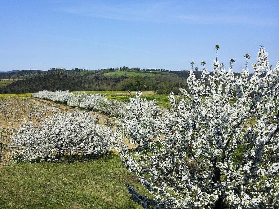 Agriturismo il giardino dei ciliegi a massa marittima cura nuova grosseto toscana - Il giardino dei ciliegi ...