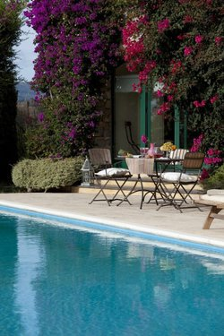 Pool side flat between centenary olive trees, with sea view - Imperia