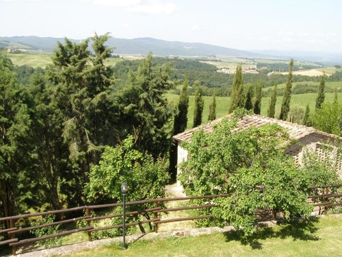 Collesassi - Montalcino