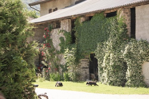 Farmhouse Prato Alpino, your home in the Alps - Samolaco