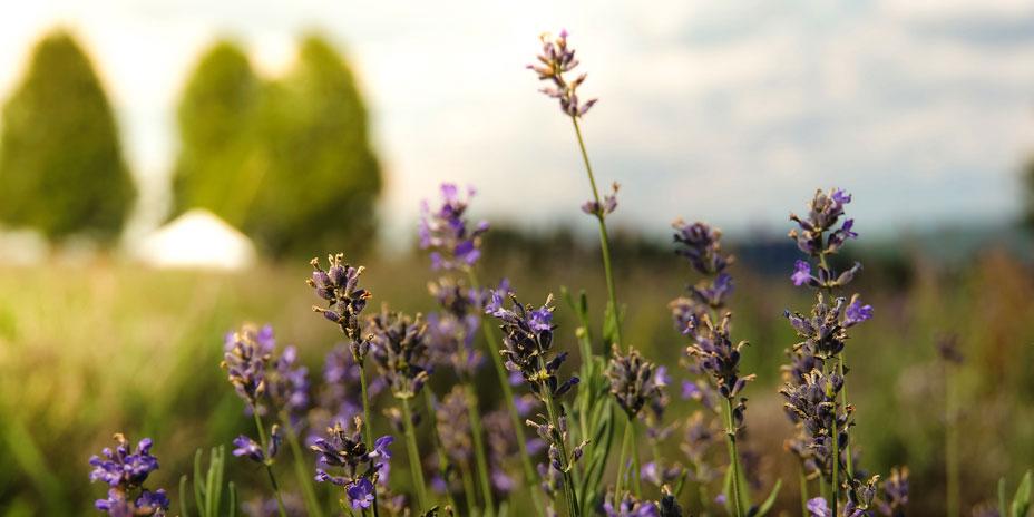 10 Cose Da Fare In Primavera In Agriturismo